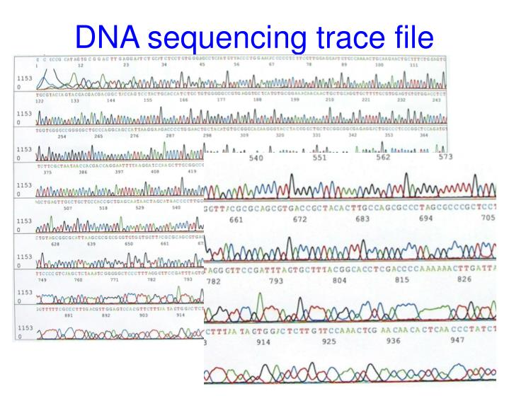 DNA sequencing trace file