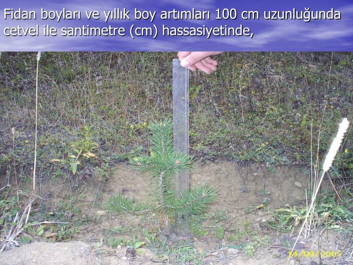 Fidan boyları ve yıllık boy artımları 100 cm uzunluğunda cetvel ile santimetre (cm) hassasiyetinde,