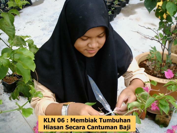 KLN 06 : Membiak Tumbuhan Hiasan Secara Cantuman Baji