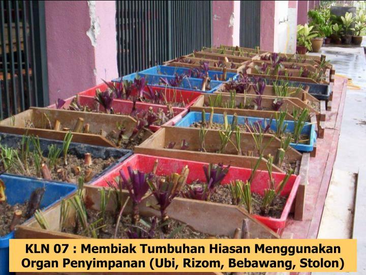 KLN 07 : Membiak Tumbuhan Hiasan Menggunakan Organ Penyimpanan (Ubi, Rizom, Bebawang, Stolon)
