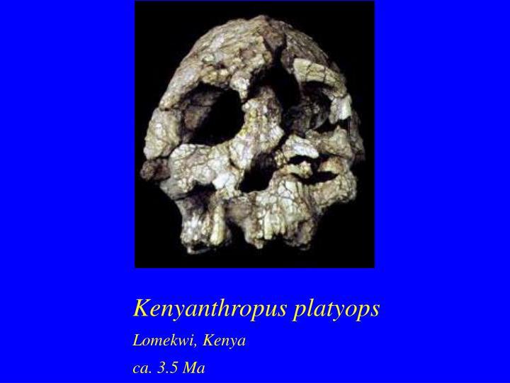 Kenyanthropus platyops
