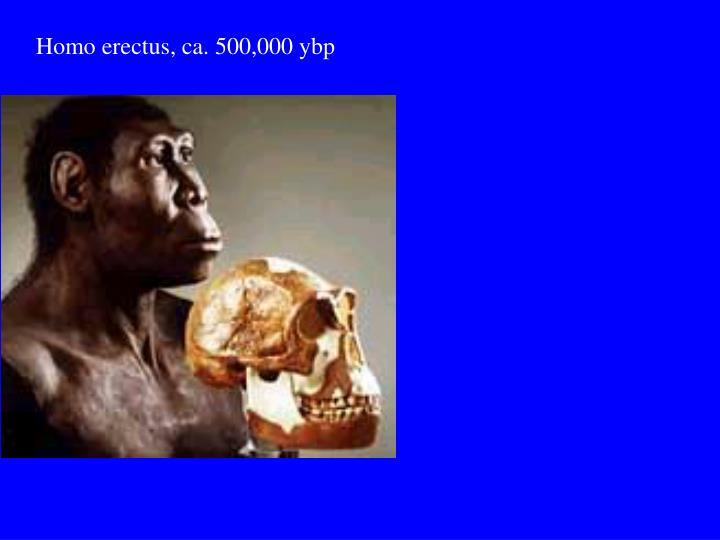 Homo erectus, ca. 500,000 ybp