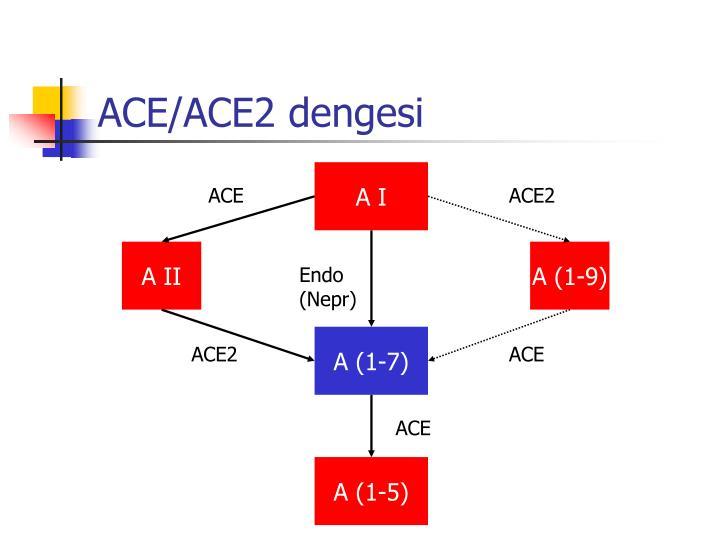 ACE/ACE2 dengesi