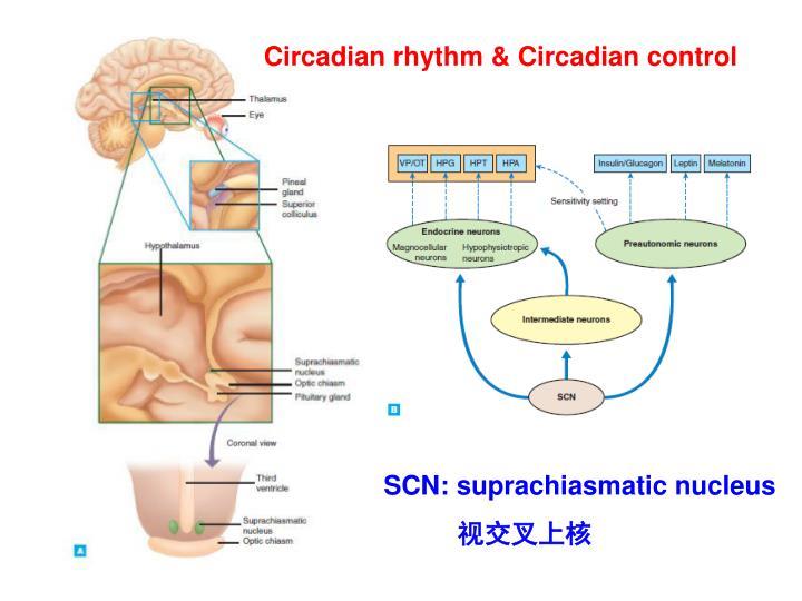 Circadian rhythm & Circadian control