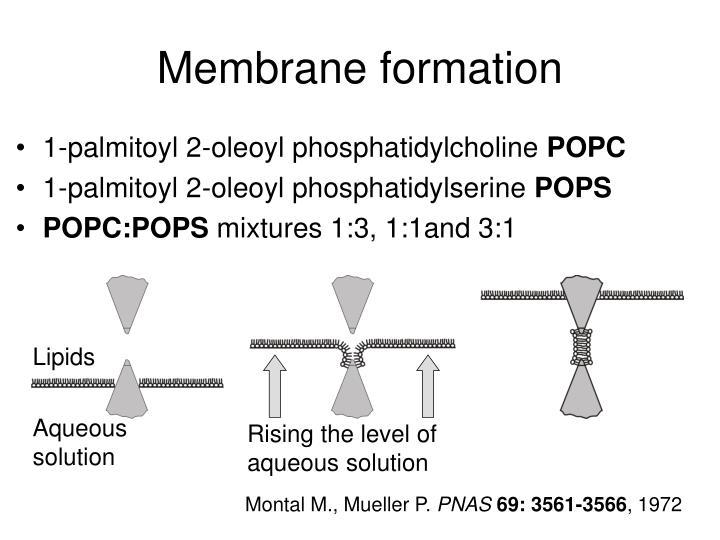 Membrane formation