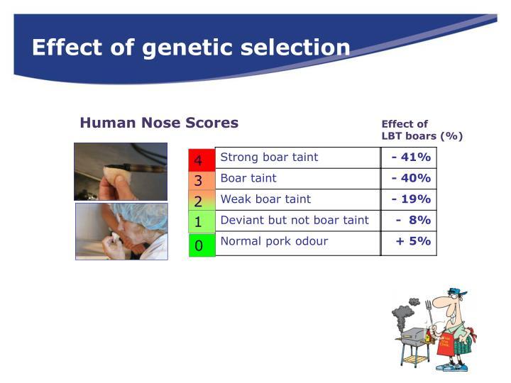 Effect of genetic selection