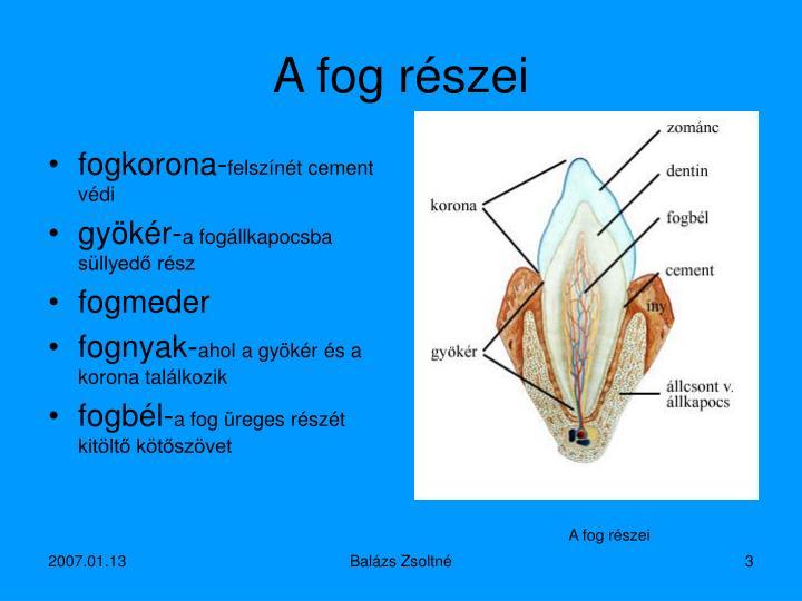 A fog részei