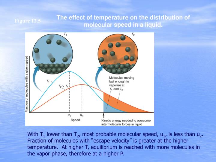 The effect of temperature on the distribution of molecular speed in a liquid.