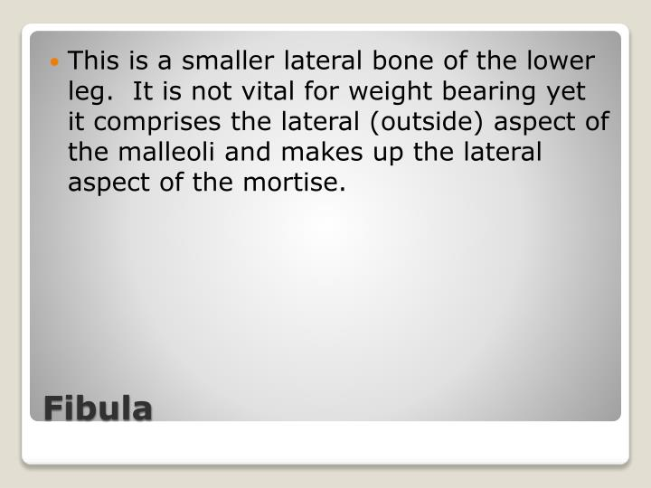 This is a smaller lateral bone of the lower leg.  It is not vital for weight bearing yet it comprises the lateral (outside) aspect of the malleoli and makes up the lateral aspect of the mortise.