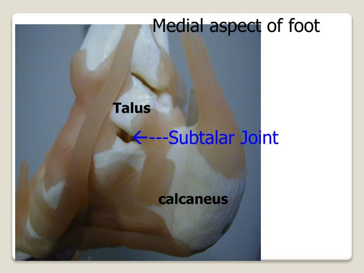 Medial aspect of foot