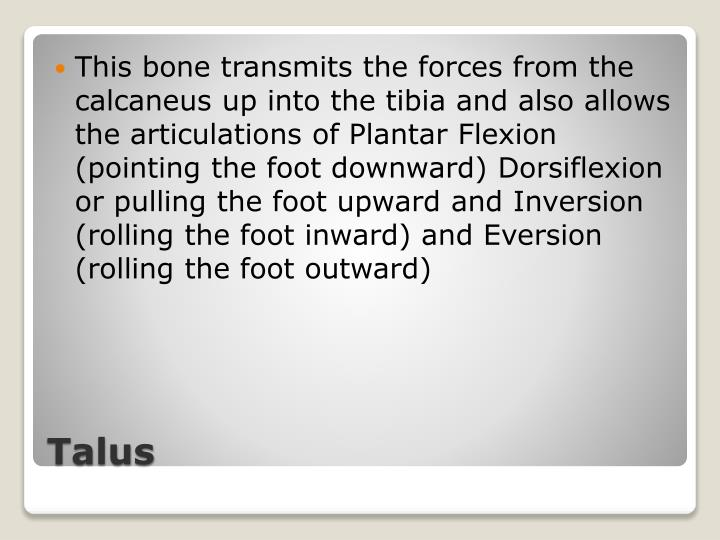 This bone transmits the forces from the calcaneus up into the tibia and also allows the articulations of Plantar Flexion (pointing the foot downward) Dorsiflexion or pulling the foot upward and Inversion (rolling the foot inward) and Eversion (rolling the foot outward)