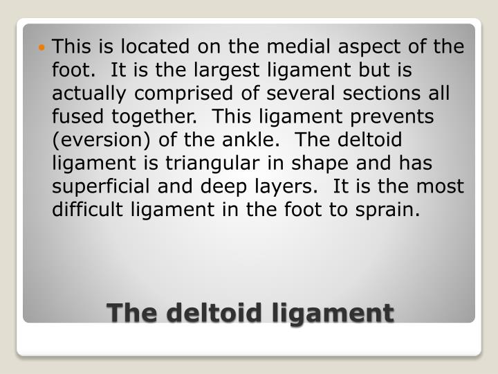 This is located on the medial aspect of the foot.  It is the largest ligament but is actually comprised of several sections all fused together.  This ligament prevents (eversion) of the ankle.  The deltoid ligament is triangular in shape and has superficial and deep layers.  It is the most difficult ligament in the foot to sprain.