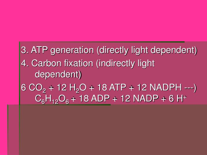 3. ATP generation (directly light dependent)
