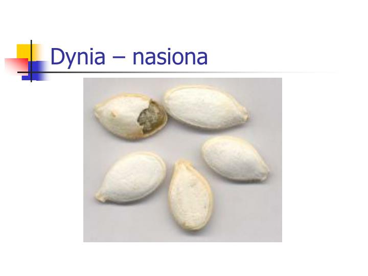 Dynia – nasiona
