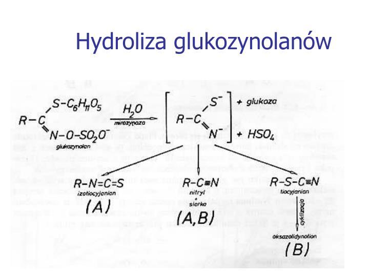 Hydroliza glukozynolanów