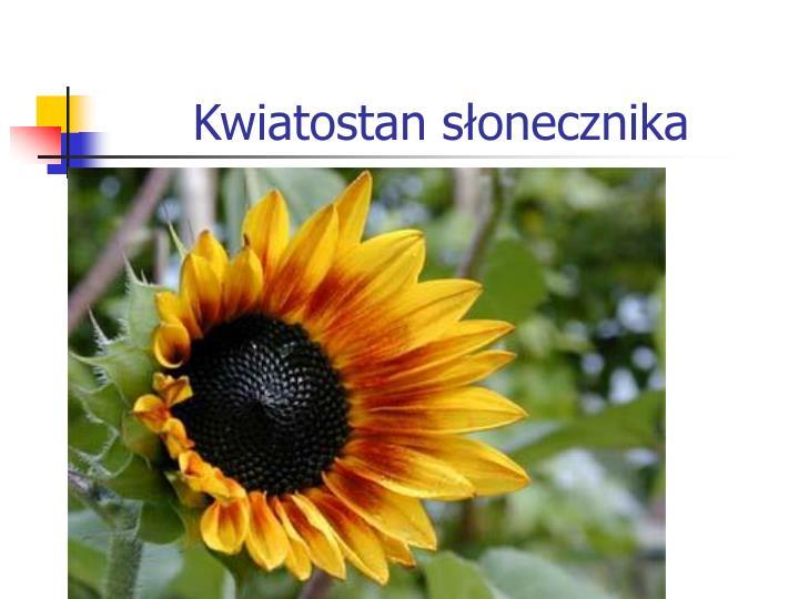 Kwiatostan słonecznika