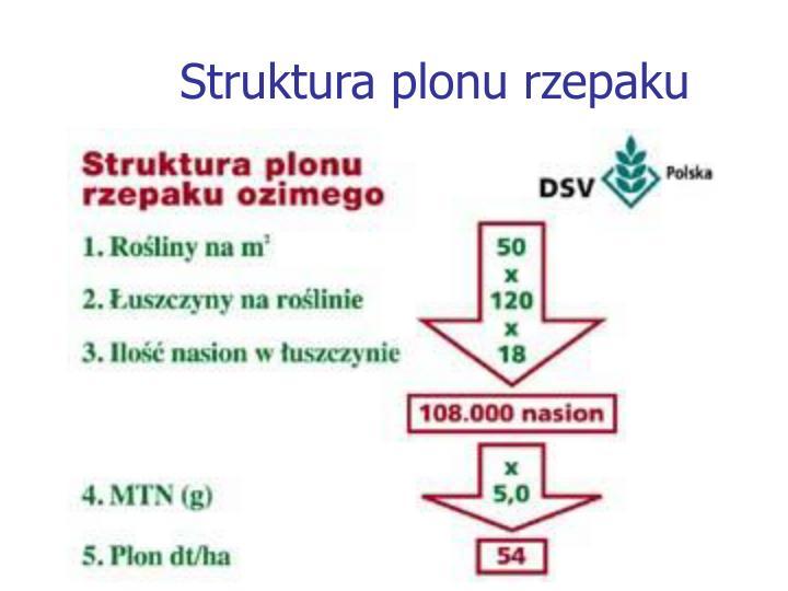Struktura plonu rzepaku