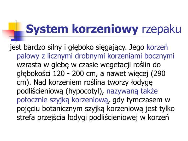 System korzeniowy