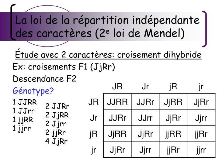 La loi de la répartition indépendante des caractères (2