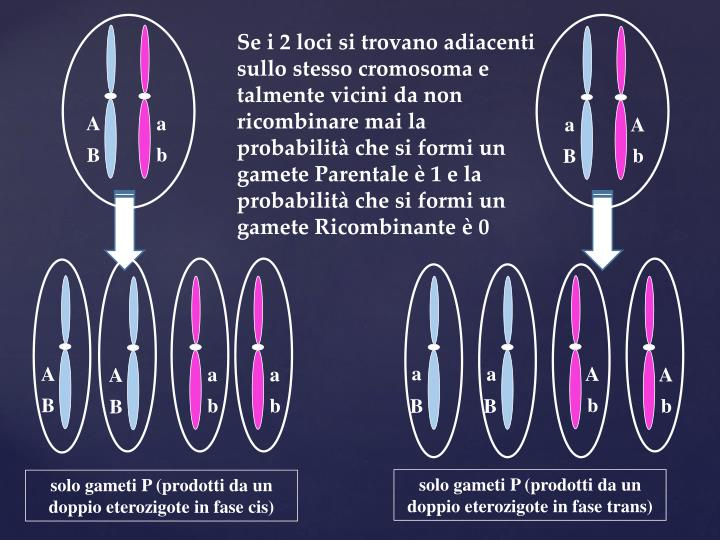 Se i 2 loci si trovano adiacenti sullo stesso cromosoma e talmente vicini da non ricombinare mai la probabilità che si formi un gamete Parentale è 1 e la probabilità che si formi un gamete Ricombinante è 0