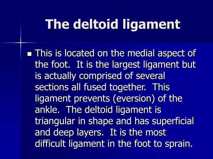 The deltoid ligament