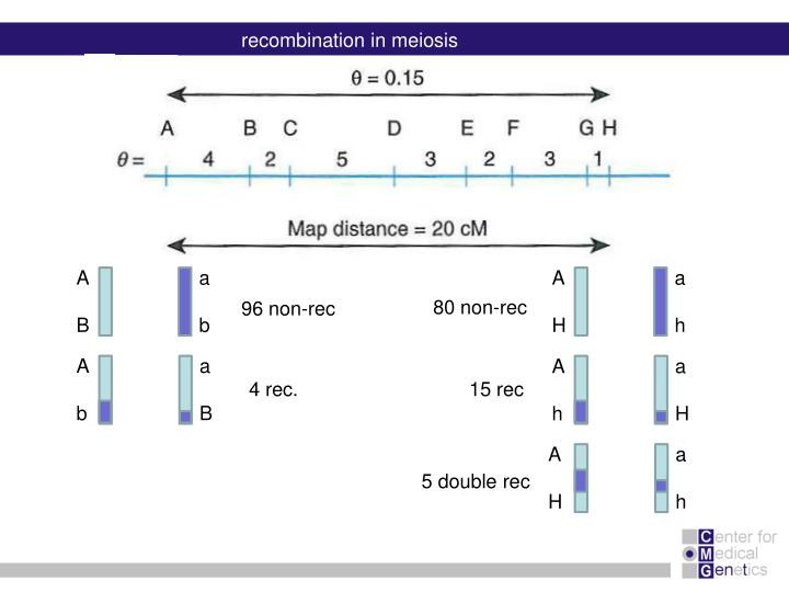 recombination in meiosis