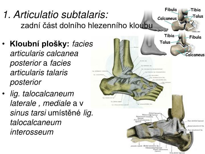 1. Articulatio subtalaris: