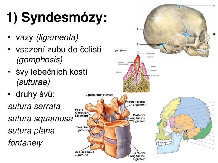 1) Syndesmózy: