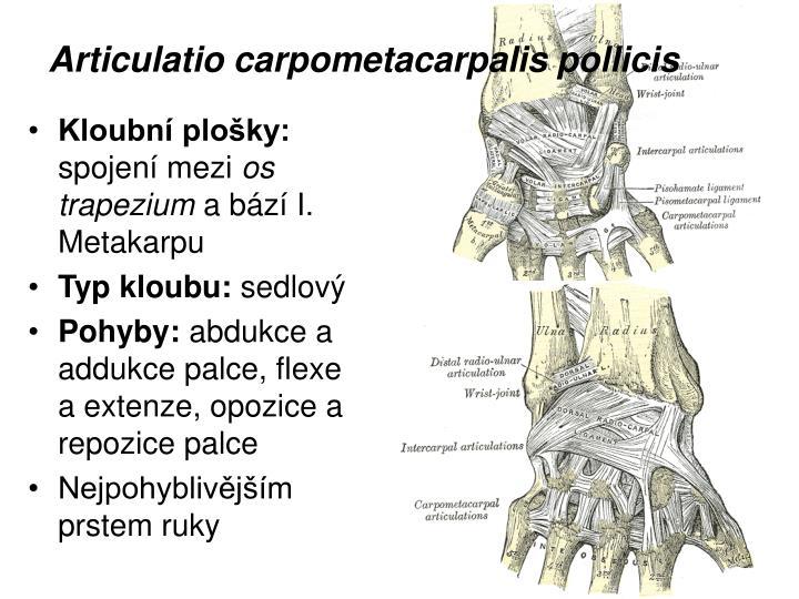 Articulatio carpometacarpalis pollicis