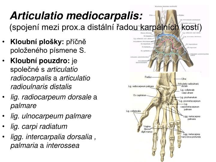 Articulatio mediocarpalis: