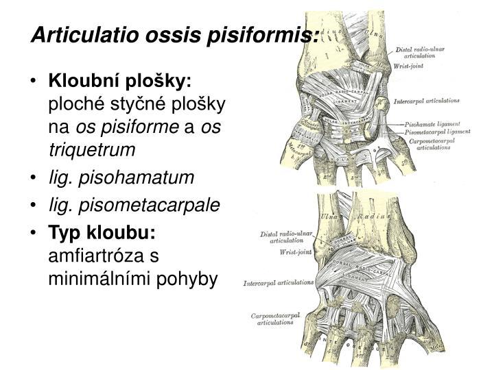 Articulatio ossis pisiformis: