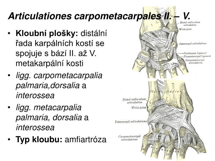 Articulationes carpometacarpales II. – V.