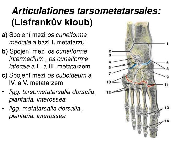 Articulationes tarsometatarsales: