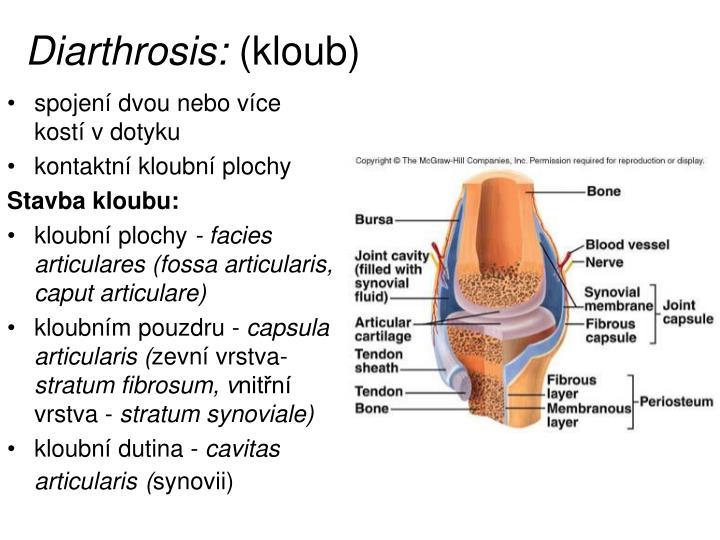 Diarthrosis: