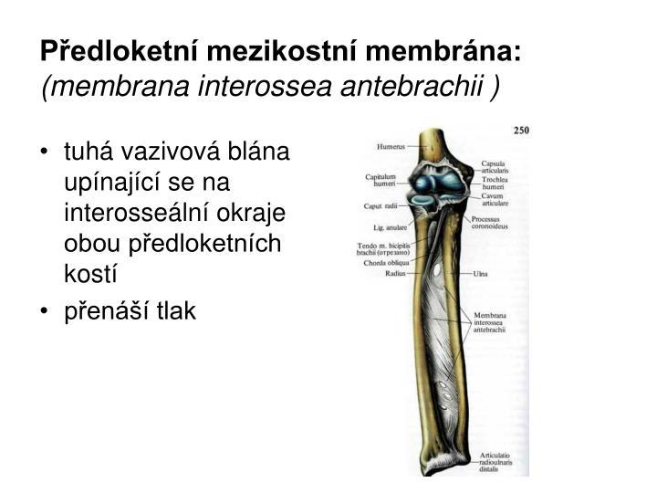 Předloketní mezikostní membrána: