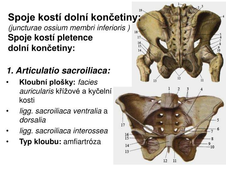 Spoje kostí dolní končetiny: