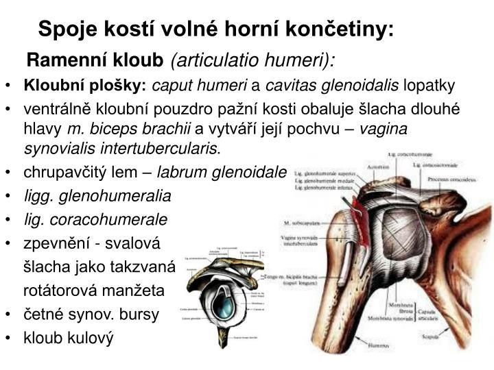 Spoje kostí volné horní končetiny: