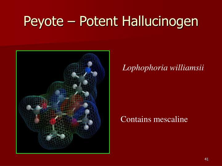 Peyote – Potent Hallucinogen