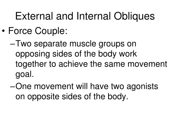 External and Internal Obliques