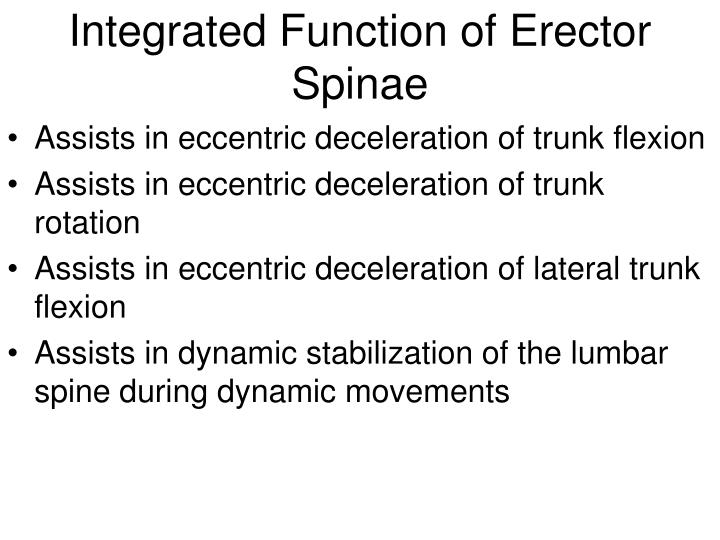 Integrated Function of Erector Spinae