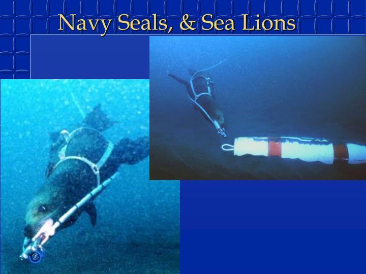 Navy Seals, & Sea Lions