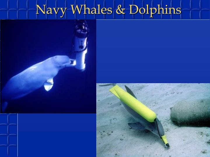 Navy Whales & Dolphins