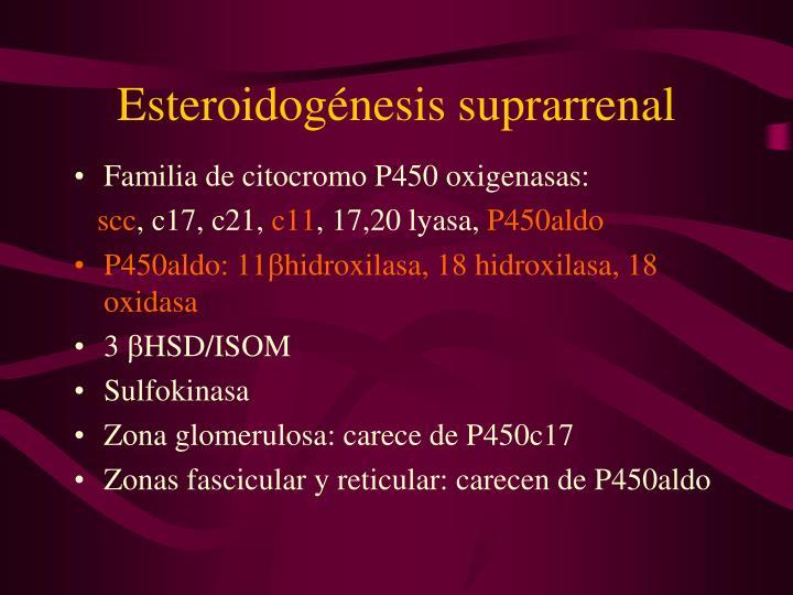 Esteroidogénesis suprarrenal