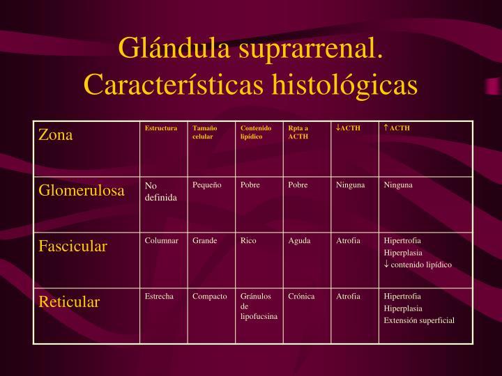 Glándula suprarrenal. Características histológicas