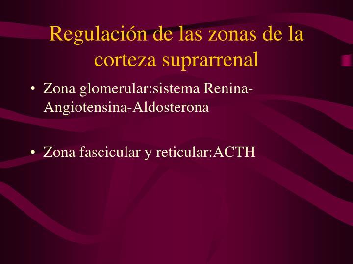 Regulación de las zonas de la corteza suprarrenal