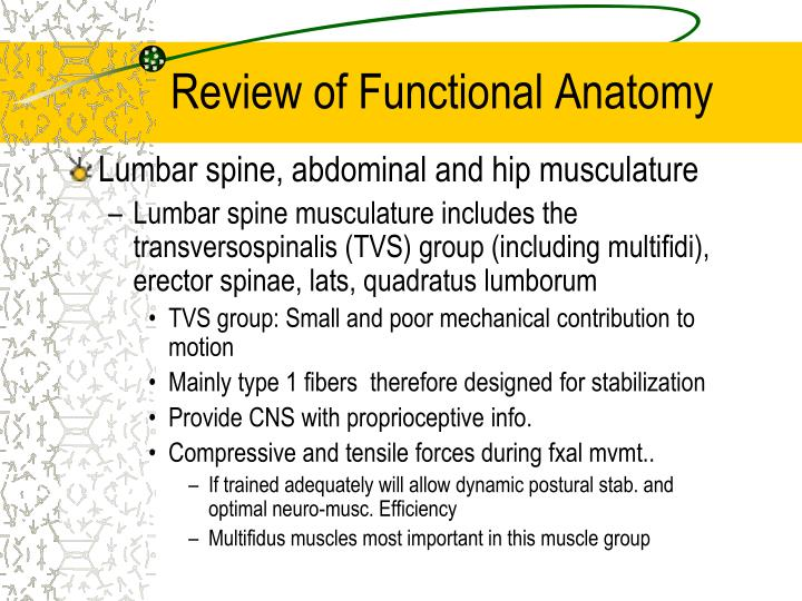 Review of Functional Anatomy