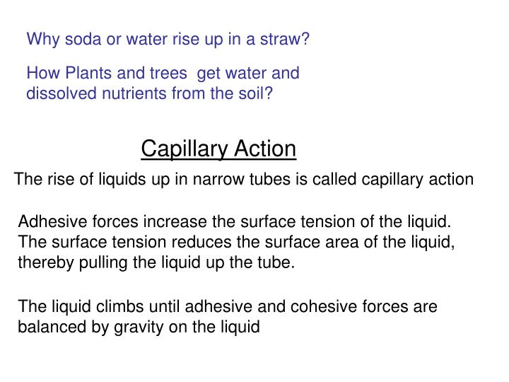 Adhesive forces increase the surface tension of the liquid.  The surface tension reduces the surface...