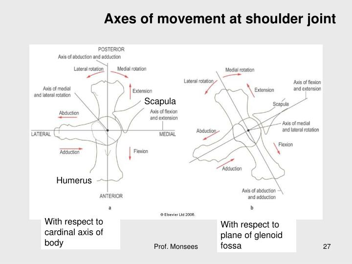 Axes of movement at shoulder joint