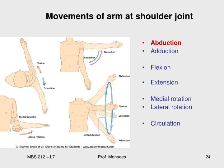 Movements of arm at shoulder joint