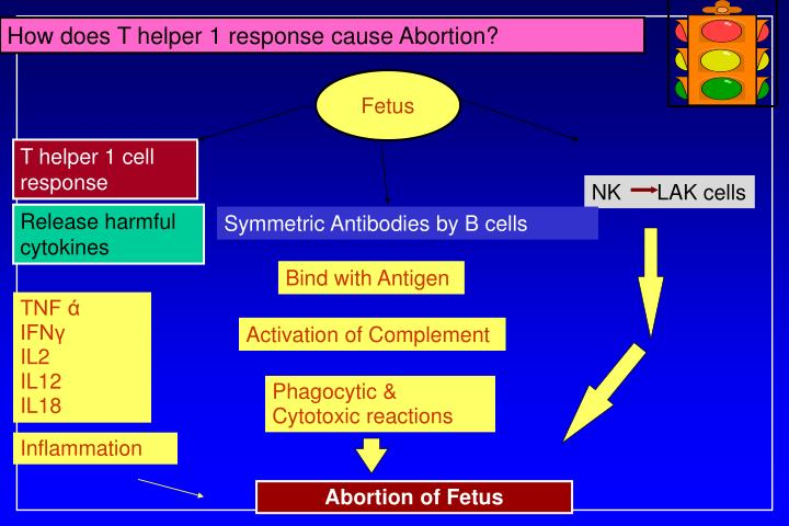 How does T helper 1 response cause Abortion?